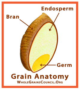 image showing whole grain components